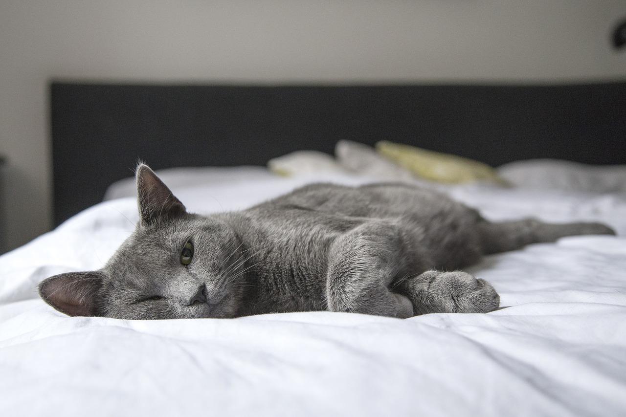 Mantén tu casa sin olores a Mascota